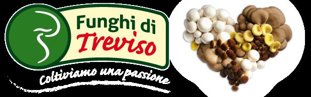 Funghi di Treviso